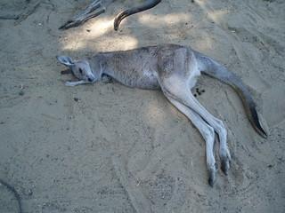 Sleeping Roo | by Kaptain Kobold