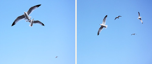 Sea Gulls | by Emily Carlin