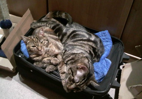 Packed Cats | by Auz