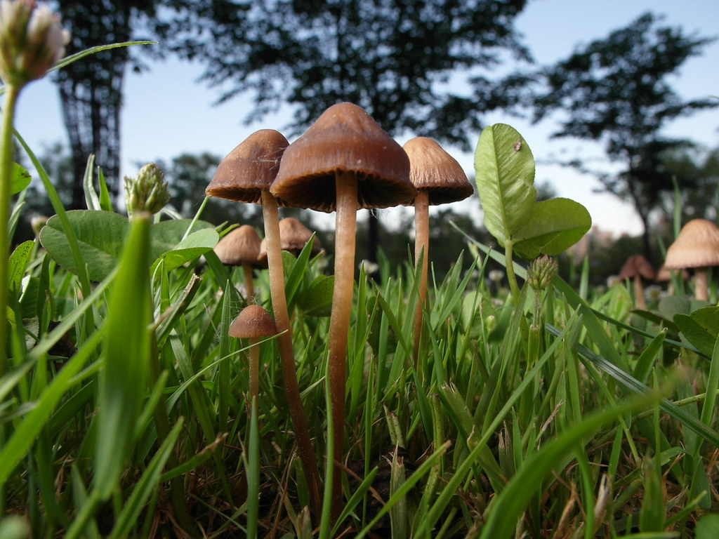 Samsung Ex1 Tl500  Imageloger - Mushroom