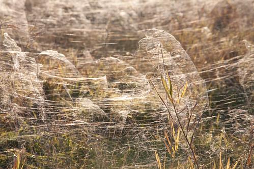Autumn Fields | by Stefanvds(.com)