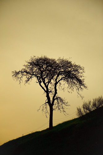 Lone Tree by Beau Hause