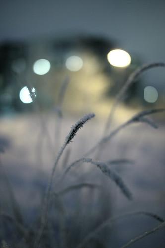 canon eos mkii mark ii markii mk2 mark2 2 5d sigma 50 14 maaniemi winter talvi snow frozen jäätynyt frost kuura lumi tero jyväskylä suomi finland flickr friends flickraward5 jyväsjärvi järvi lake jää ice night yö 100v10f flickraward 1025fav mywinners 2010