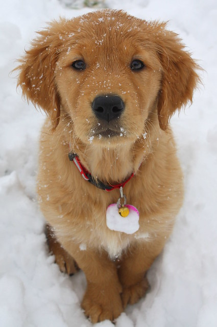 Puppies keep you warm on a cold day!