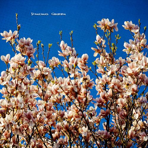 blue madame sky texture geotagged spring queen sascha magnolia onblue rueb hbm magnolie insashi rüb aplusphoto damniwishidtakenthat vanagram lesbrumes springlicious updatecollection allrightsreserved©sascharueb ☼♥givemefive♥☼ sash´skitchenstudiophotography