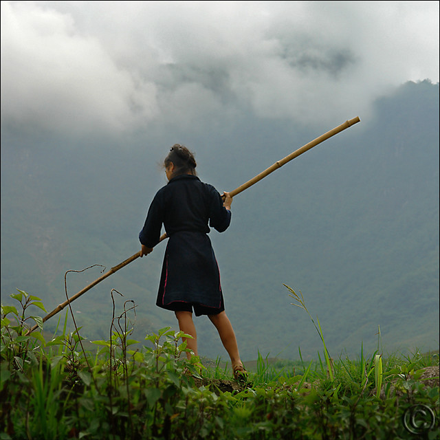 Balance and reach over rice paddies