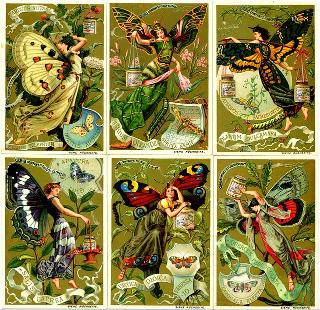 Liebig Tradecards S265 - Butterfly Girls