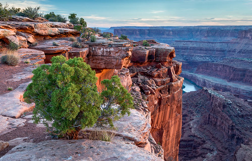 coloradoplateau coloradoriver deadhorse deadhorsepoint deadhorsepointstatepark usa unitedstates utah canyon evening juniper landscape outdoor rim river statepark sunset tree water