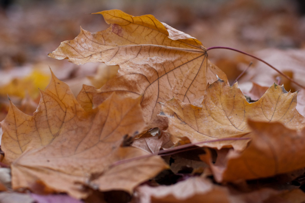 Close Up Of Autumn Leaves Fallen To The Ground Close Up Of Flickr