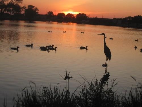 sunset bird oaklake
