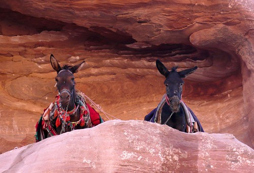 tweedle dee and tweedle dum, petra | by hopemeng