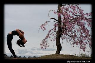 yoga in spring before urdhva dhanurasana  it'll be nice