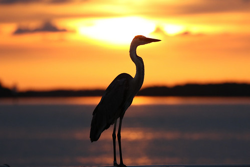 sunset ft desoto st pete florida boat ramp bird heron sun golden sundown tampa bay 7dm2 canon dusk evening twilight