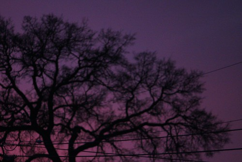 california pink sunset sky black tree nature silhouette work purple dusk branches wires calaveras picnik angelscamp calaverascounty altaville