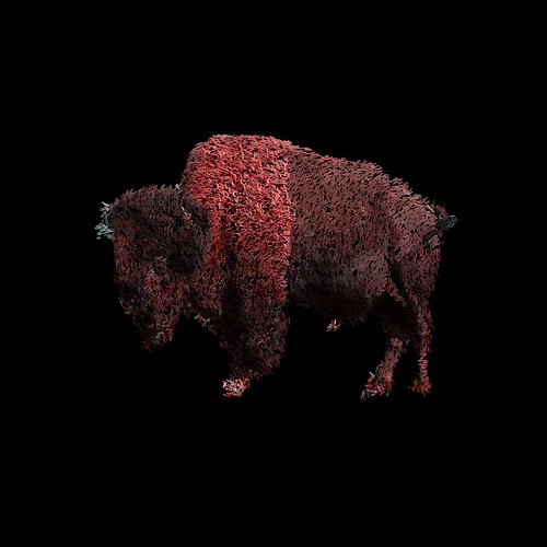 bison5 | by hebchop