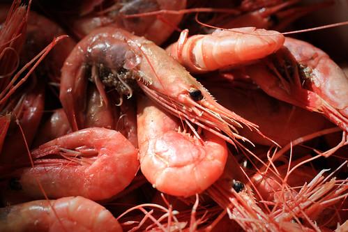 Shrimps   by Håkan Dahlström