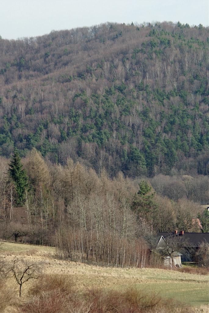 Las mieszany / Mixed forest