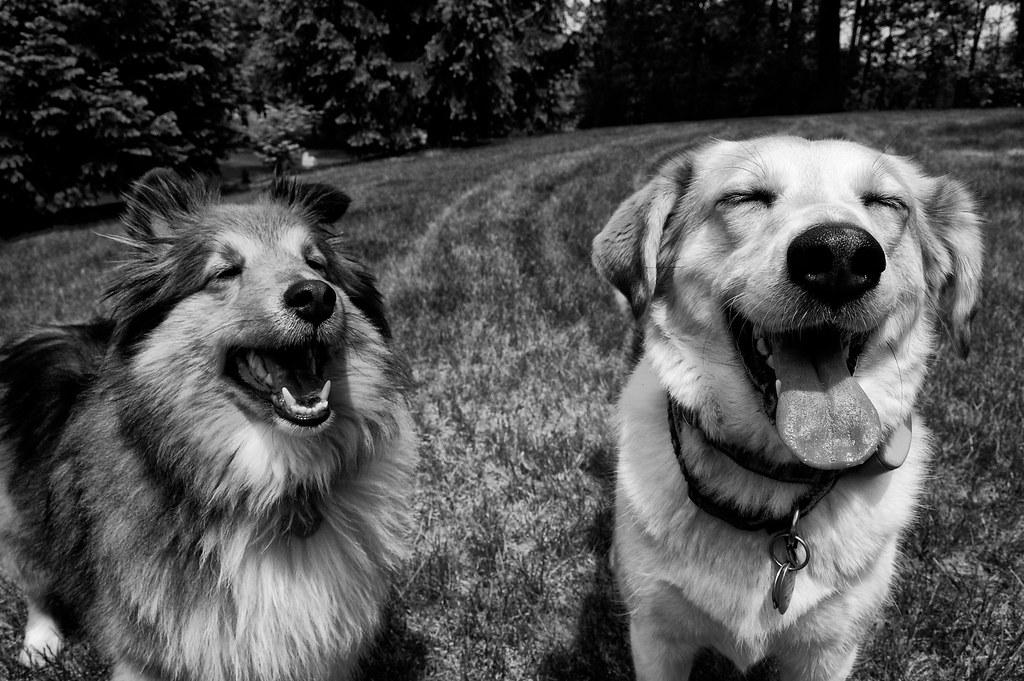 Naozaj na nás psy vyškierajú svoj úsmev?