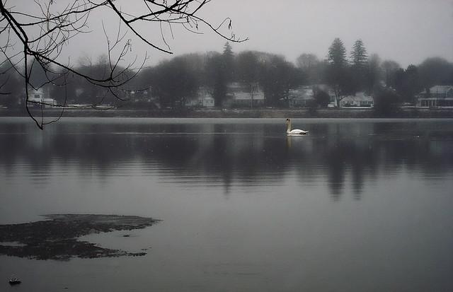 lake quannapowitt (2010)