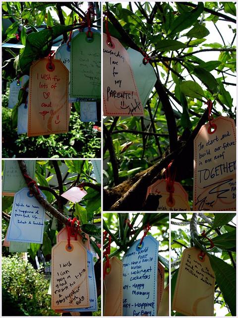 Wish Tree - Sentosa