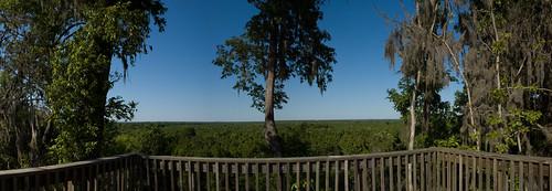 panorama southcarolina bluffs congaree calhouncounty congareeriver turkeytrack congareebluffs cowaseebasin