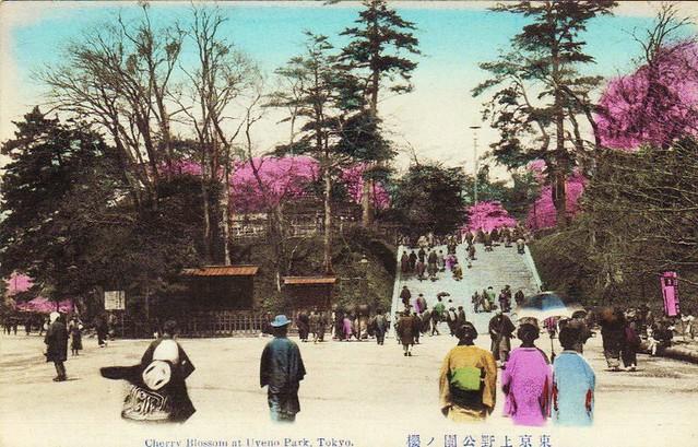 Tokyo- Uyeno Park- cherry blossom- vintage postcard c.1900- 24-12-2009 20;16;39