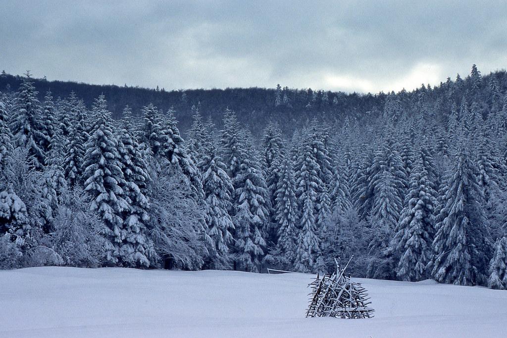 Śnieżnica