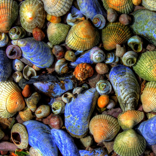 shells   by Brian Moriarty