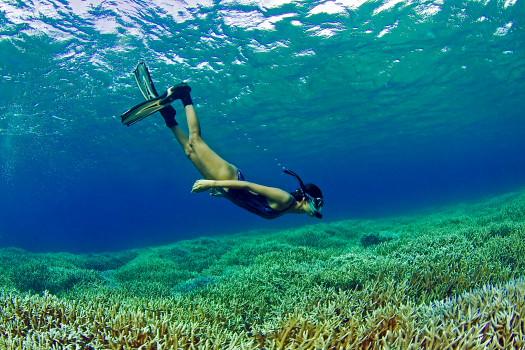 snorkelling in Sri Lanka, pigeon island
