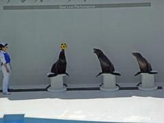 日, 2010-05-02 11:53 - あしかのパフォーマンス Sea lion performance