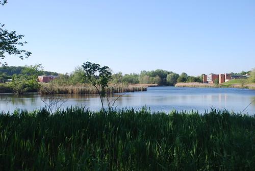 north-pond