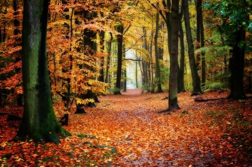 wood autumn trees fall hamburg herbst wald orton rissen kiegrube