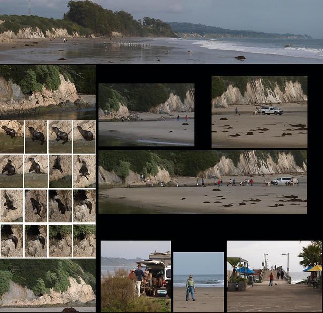100301 Goleta Beach Slough baby seal rescue and friends PScs4 E3