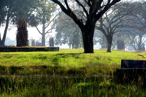 landscape bandipur forest karnataka green tree nikon d7100 faisy5c 5ccha