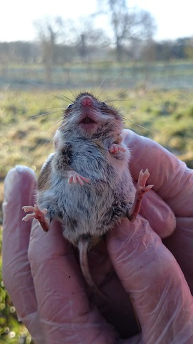 West Lexham and Pensthorpe 2015 | by Wild Days Conservation