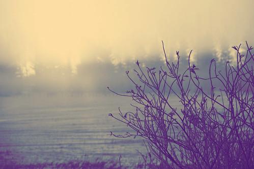Morning Fog 3 | by krystian_o