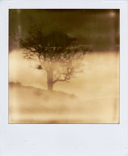 Impossibly foggy tree. | by caballosblancos