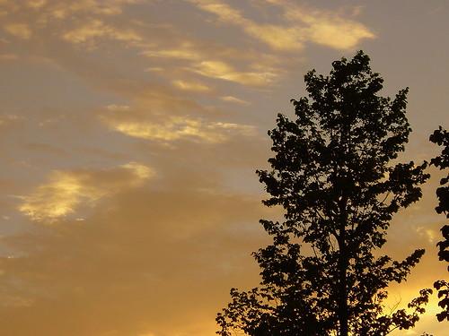 sunset sun tree wisconsin dusk 2006 countyfair wi medford taylorcounty centralwisconsin medfordwi taylorcountyfair 2006taylorcountyfair