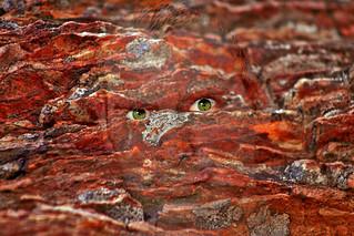 (#0027) Rock Face