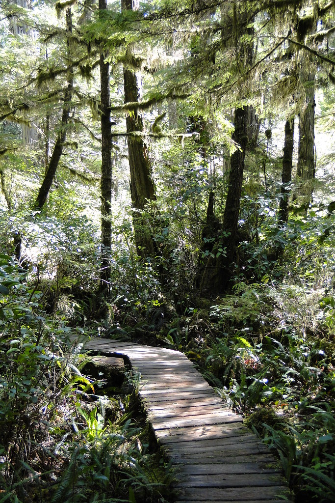 Rain Forest Walk - Pacific Rim National Park - Vancouver Island, BC, Canada - 03