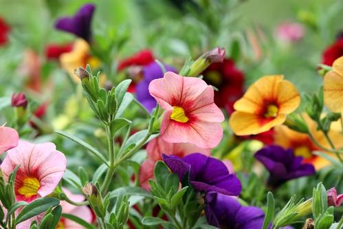Peggy's Flowers   by Dawn Huczek