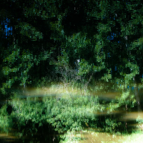 d5000 kokosingriver nikon abstract distortion forest landscape natural noahbw reflection river square summer sunlight trees water woods treesinwater painterly