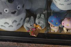 Totorooo