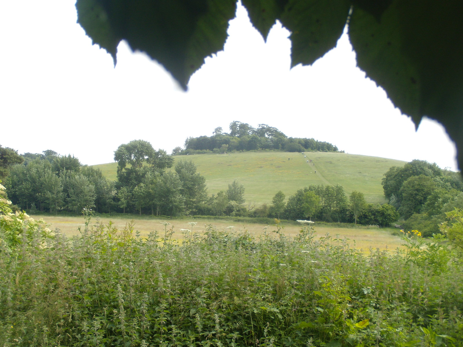 Wittenham clumps With the majestic white Oxfordshire Alps towering behind. Appleford Circular