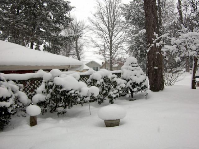 Backyard Garden In Winter