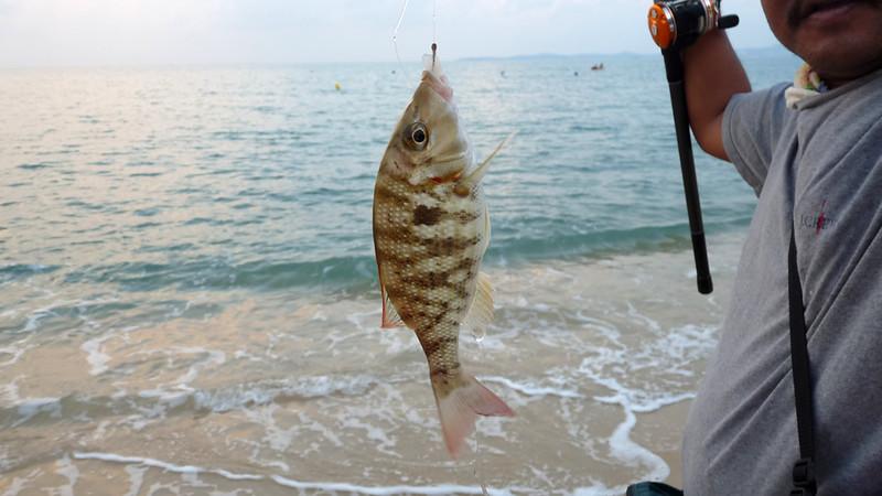 Koh Samui Fishing@ Maenam コサムイ メナムビーチ 釣り3