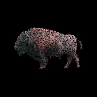 bison10   by hebchop