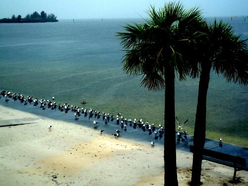 trees seagulls tree beach water birds photo sand gulf florida palm hudson shores
