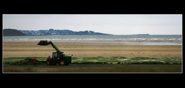 Bretagna-La raccolta delle alghe