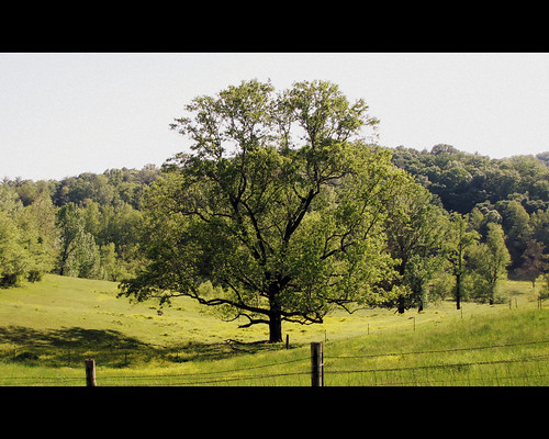 mountains tree rural farm country pasture dahlonega northgeorgia